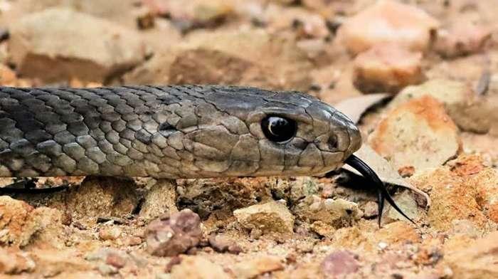 15 самых жутких созданий Австралии