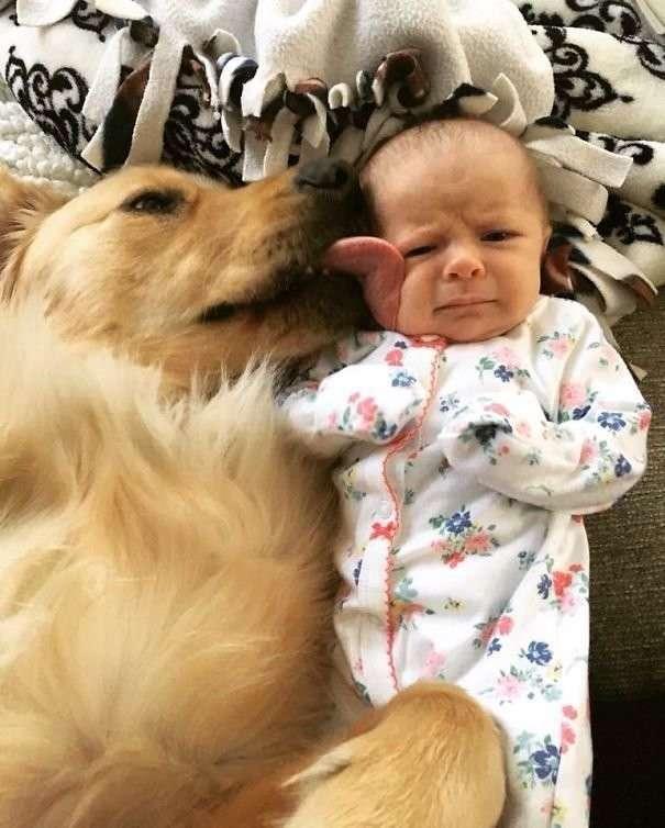 Глядя на эти фото, вы поймете, что ребенку нужна собака!