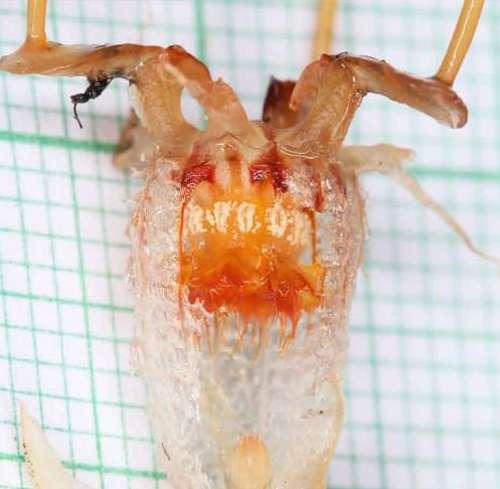 Учёные обнаружили подземное растение, похожее на инопланетный организм