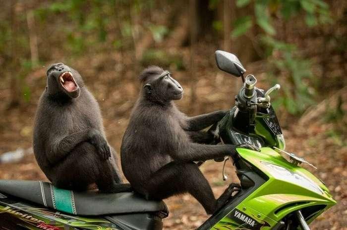 Самые забавные фотографии животных 2017 года