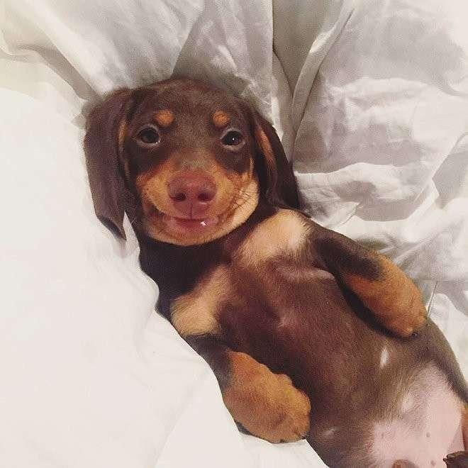 Собаки-улыбаки. Жизнь любит тех, кто ей улыбается!