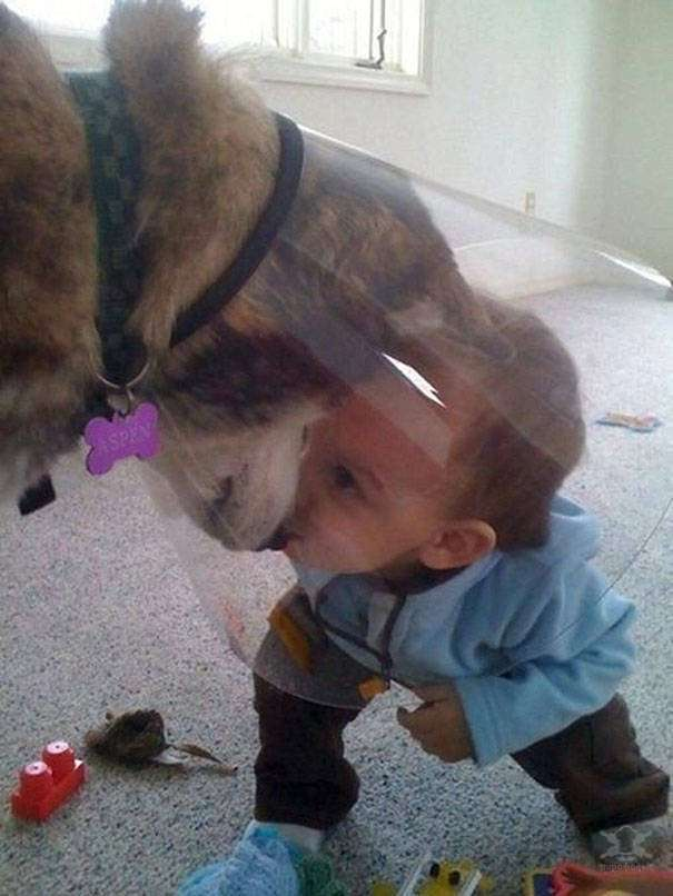 Дети и собаки — лучшие друзья