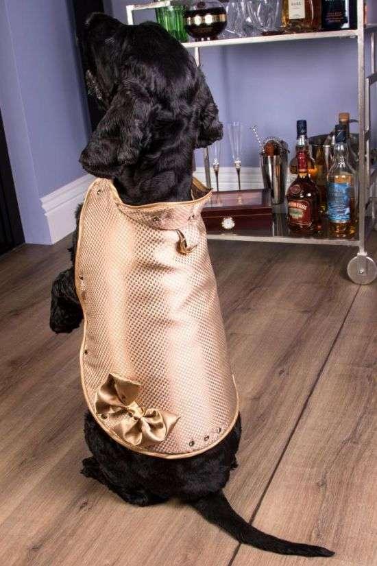 Собачий жилет стоимостью 1,4 миллиона долларов