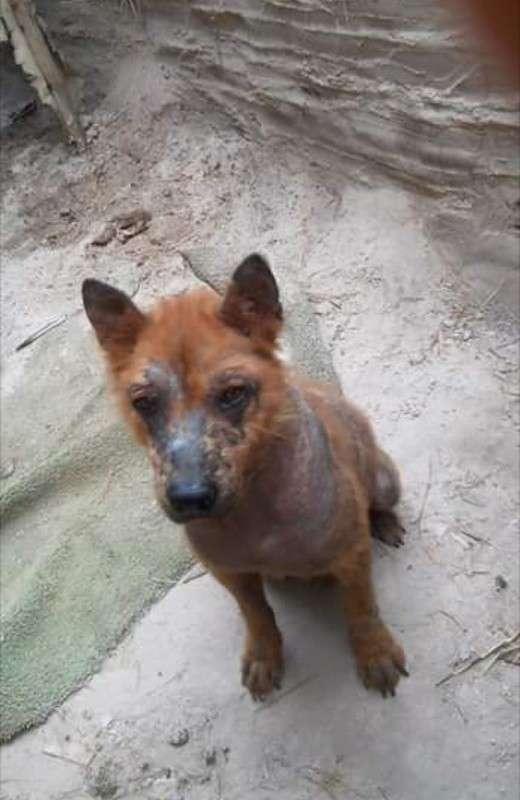 Женщина нашла под своей машиной напуганного лысого пса и решила спасти бедное животное