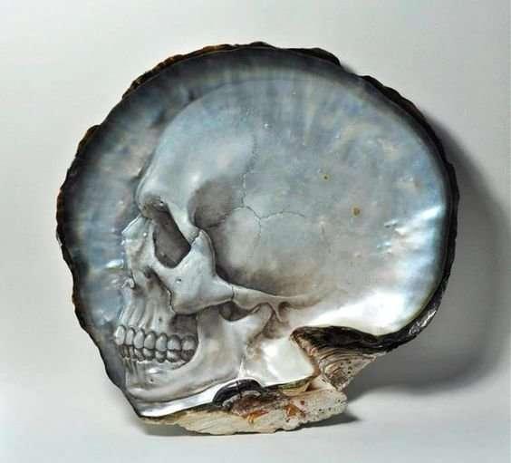 Морские раковины как произведения искусства