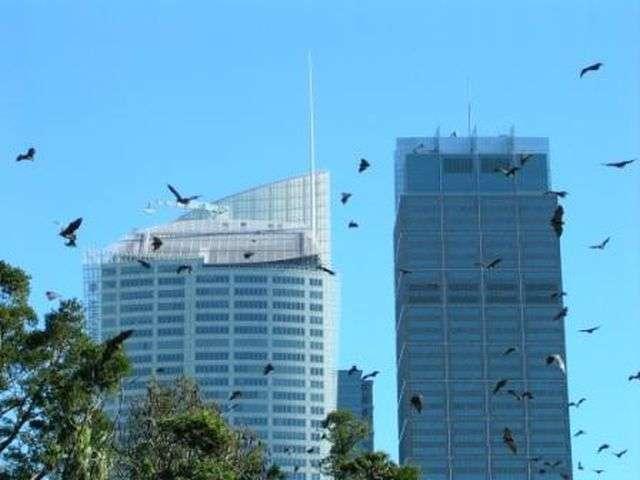 Странные и необычные фото с австралийских просторов