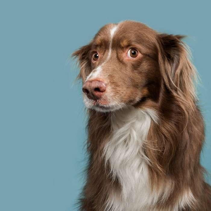 Собачий характер: замечательные портреты собак от Эльке Фогельзанг