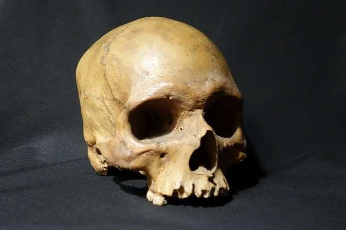 Жуткая история черепа, найденного в британском пабе