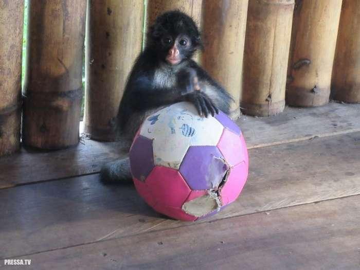 Осиротевшая обезьянка София