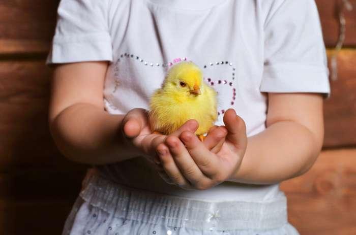 Курица или яйцо? Ученые наконец-то дали ответ на вопрос, что появилось раньше!