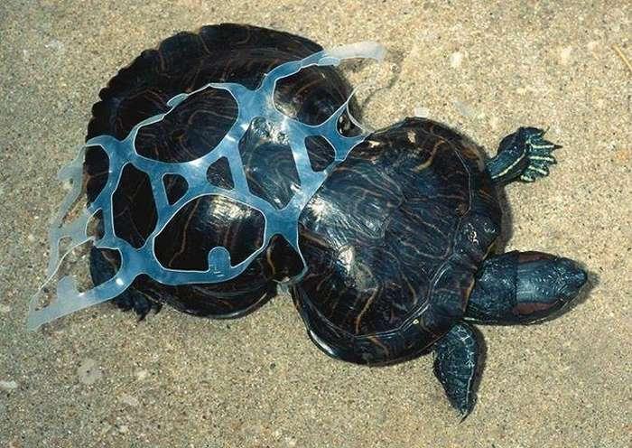 15доказательств того, что каждая выброшенная бутылка изпластика может стать приговором для животных