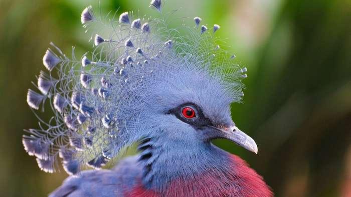 Удивительные птицы мира