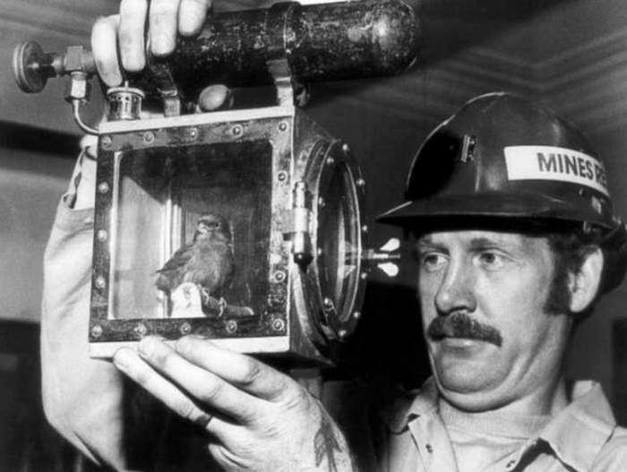 Зачем шахтеры использовали такие устройства?