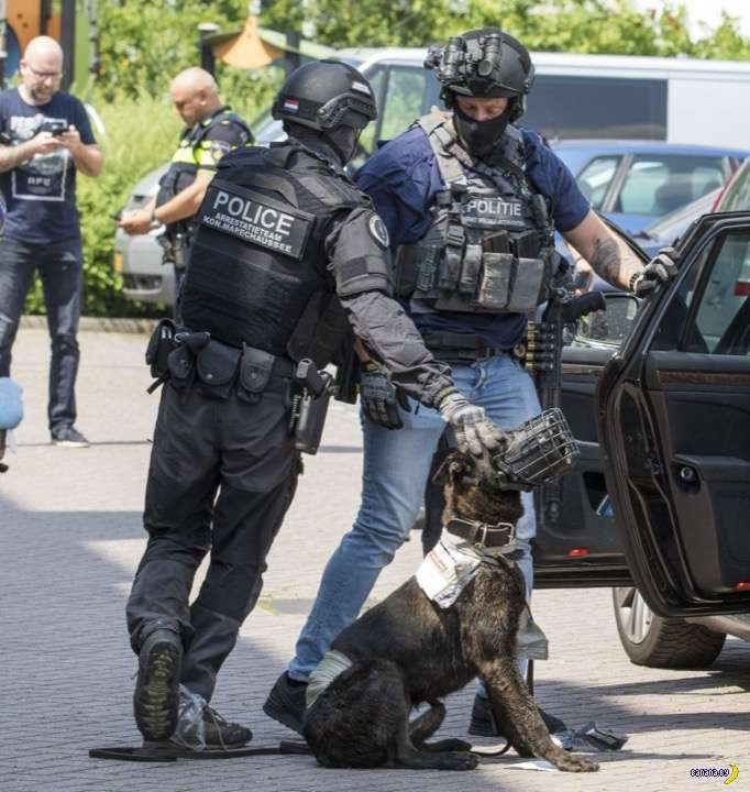 Полицейский пёс погиб в Схидаме