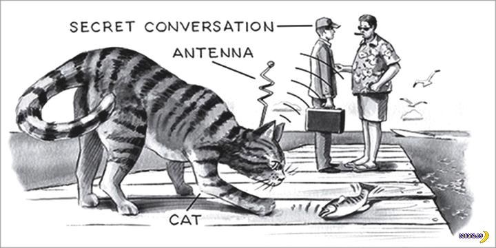 Провал -Акустической кошки-