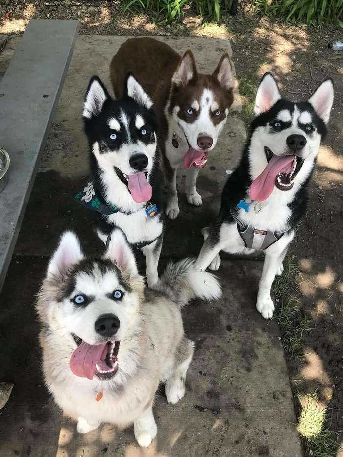 Фотографии собак действуют лучше любых антидепрессантов. Ивот 20тому доказательств