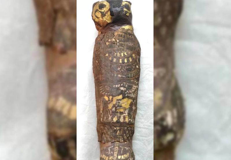 Древнеегипетская мумия -сокола- скрывала труп младенца-3 фото-