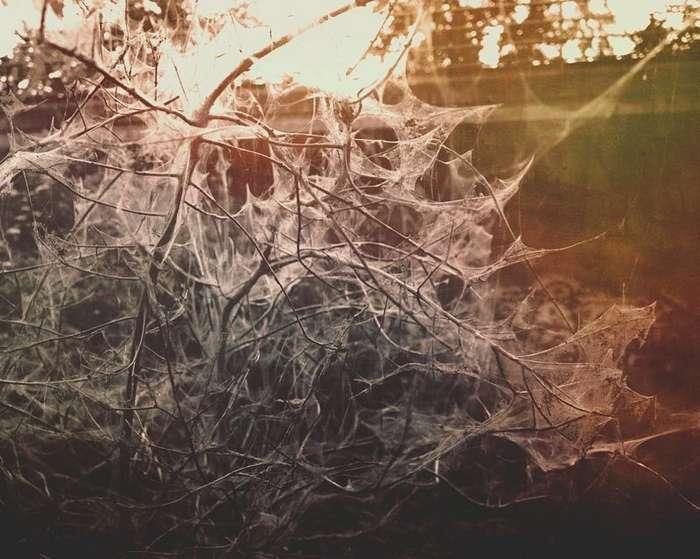 Гусеницы превратили город в декорации фильма ужасов-10 фото-