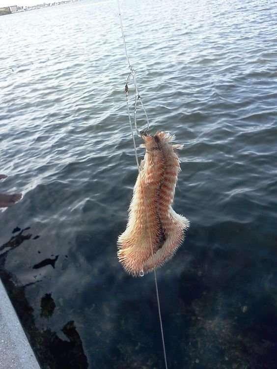 С такой приманкой на рыбалке вы будете самым центровым рыбаком-29 фото + 2 видео-