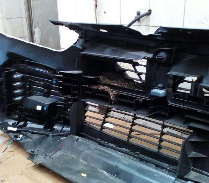 Неожиданная находка в бампере автомобиля-4 фото-