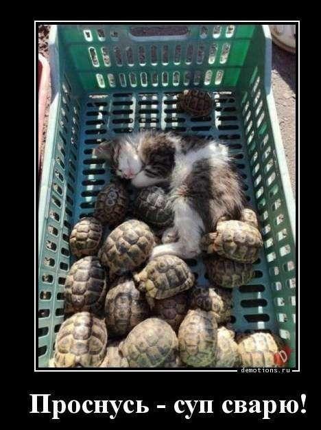 Демотиваторы с кошками-24 фото-
