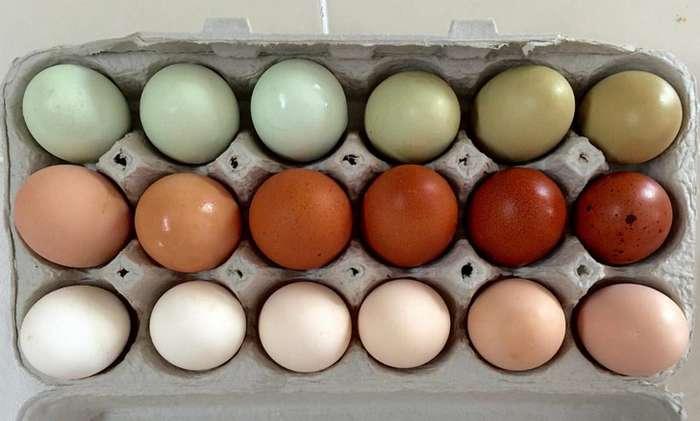 Чем насамом деле отличаются коричневые яйца отбелых?