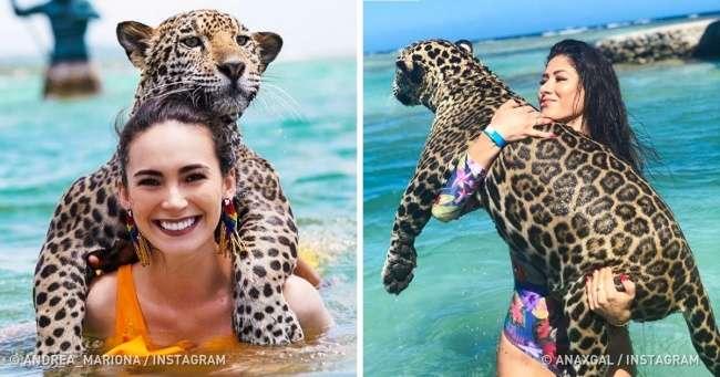 Представляем вам остров, где можно плавать снастоящими добрейшими ягуарами