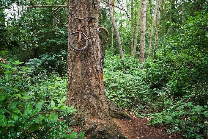 Тайна легенды вросшего в дерево велосипеда