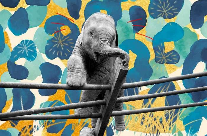 Самые курьезные случаи побегов животных из зоопарков