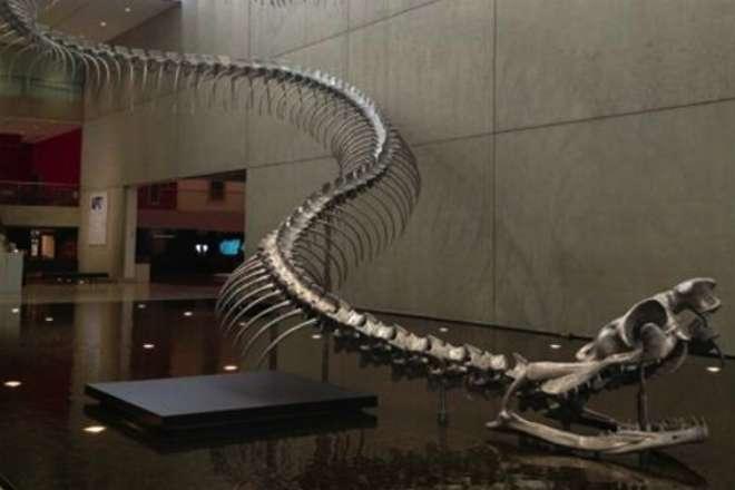 60 миллионов лет назад жила змея, весившая больше тонны