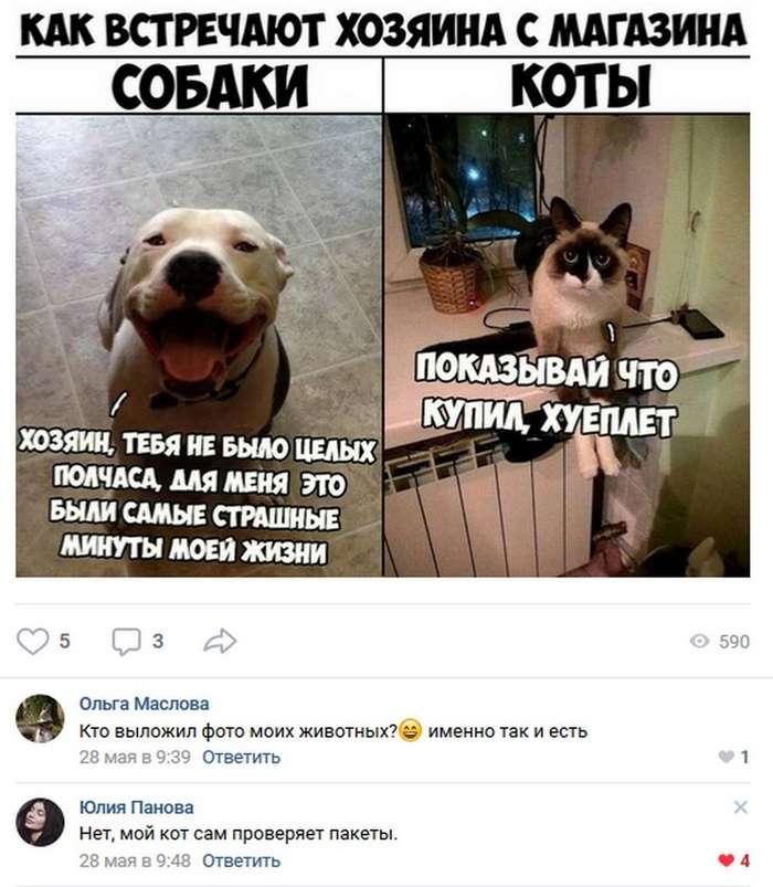 Позитивные комментарии и высказывания из социальных сетей 01.06.18 (50 фото)