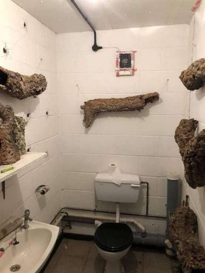 Туалет для настоящих ценителей
