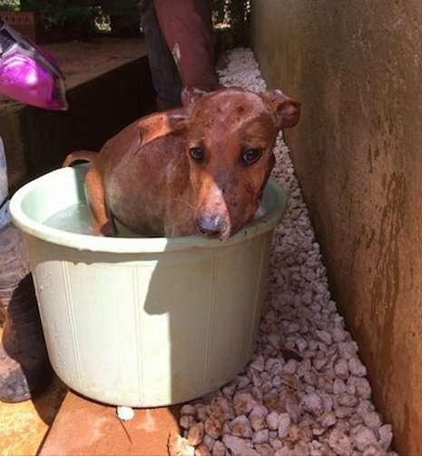 -Я видела перед собой глаза, полные тоски…- Старшеклассница привезла с Ямайки не сувениры, а щенка!-14 фото-