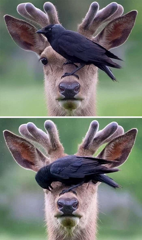 Эти забавные животные-20 фото-