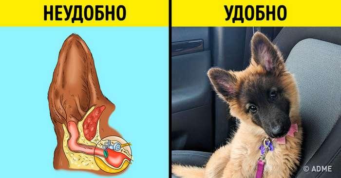 Почему собаки наклоняют голову, когда мысними разговариваем