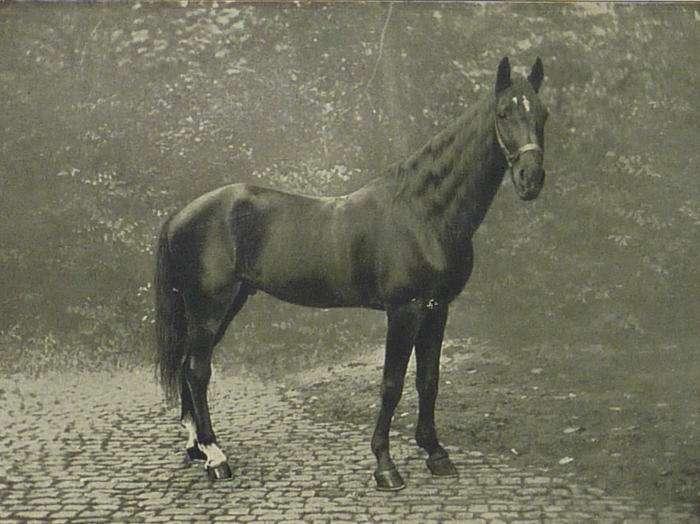 Судьба коня, интеллект которого приравнивали к человеческому