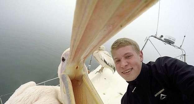 Пеликан попробовал фотографа на вкус, пока тот делал с ним селфи-5 фото + 1 видео-