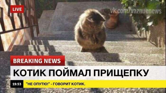 Добрые новости в последний понедельник лета