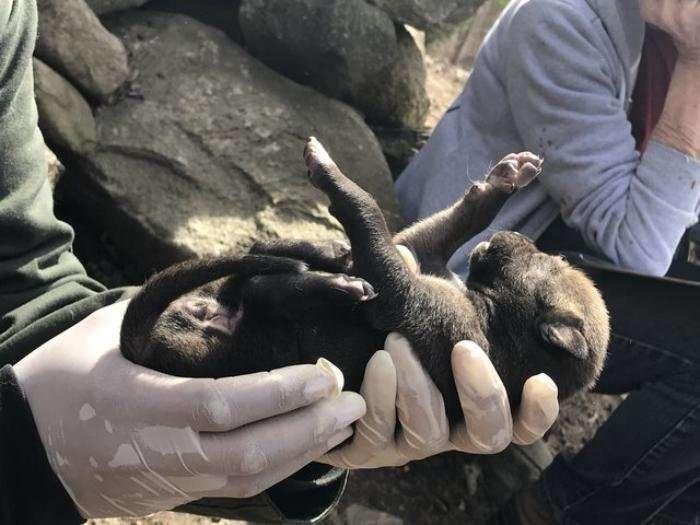 Когда родились эти щенки, весь мир радовался. Это настоящее чудо!