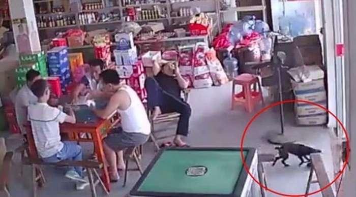 Мохнатый преступник утащил кошелёк, выпавший из кармана китайца