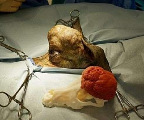 Ветеринары спасли таксу, напечатав ей новый череп