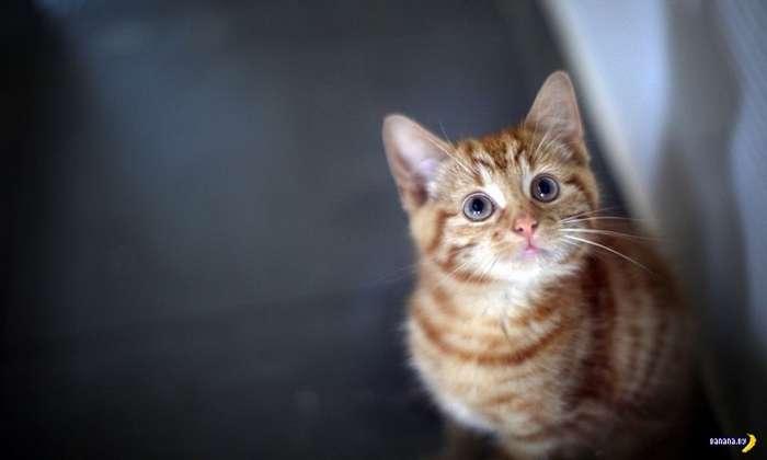 С точки зрения кота мы большие лысые коты