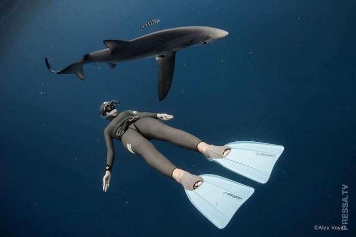Великолепные подводные фотографии от Alex Voyer и Alex Roubaud