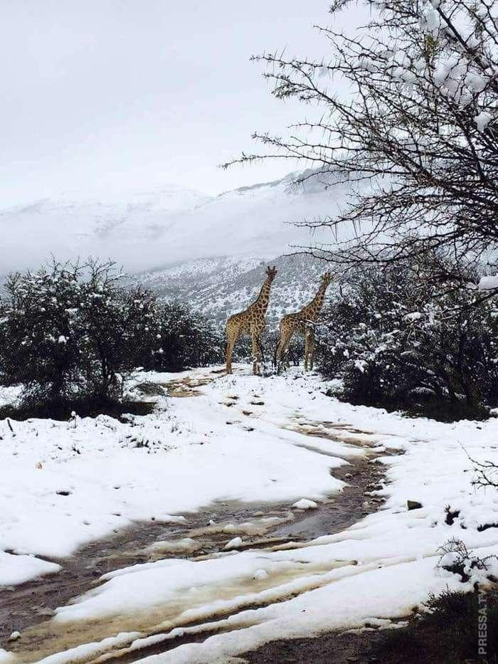 Природная аномалия: в Южной Африке выпал снег