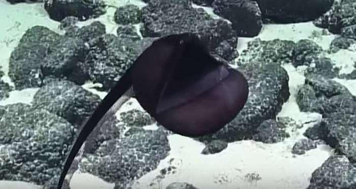 Гальперский угорь - необычное морское существо