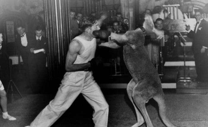 Странный спорт наших предков -8 фото-