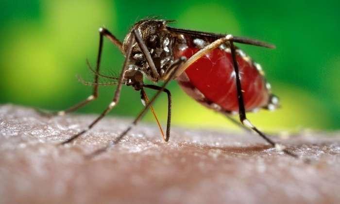 ГМО- комары в большой биотехнологической игре-2 фото-