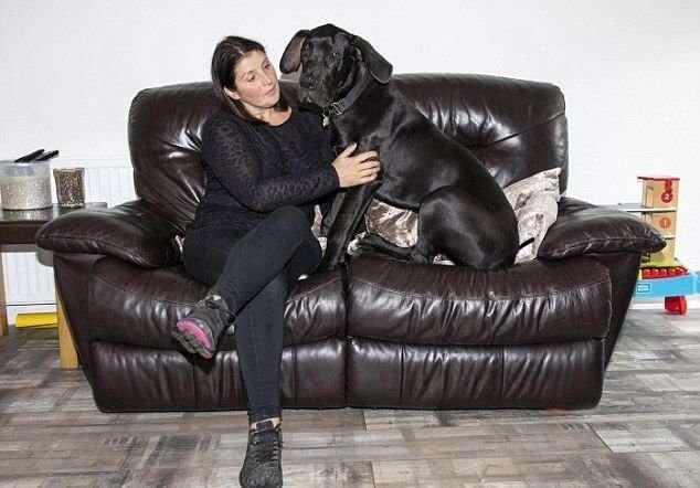 Супруги забрали из приюта щенка-великана-8 фото-