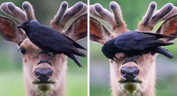 25 животных, которые познали пофигизм в совершенстве-24 фото + 1 гиф-