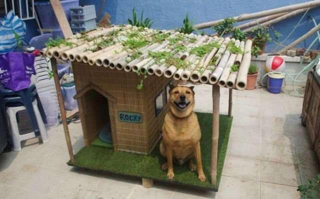 Как сделать собаку счастливой?-11 фото-